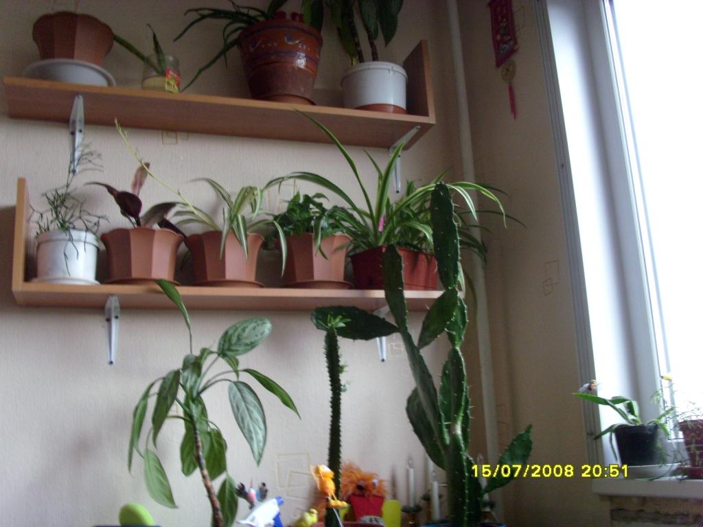 Цветы. Растения комнатные