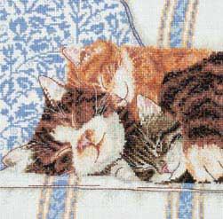 3 кота. Животные