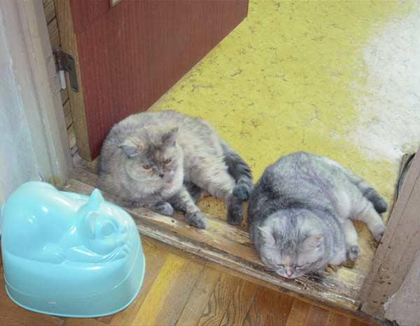 Три кошки. Кошки