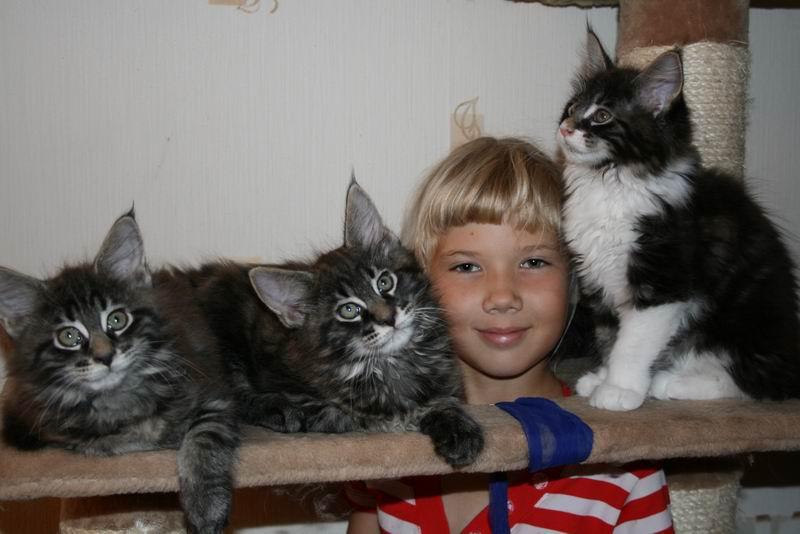Дети кошачьи и человечьи. Мой усатый-полосатый