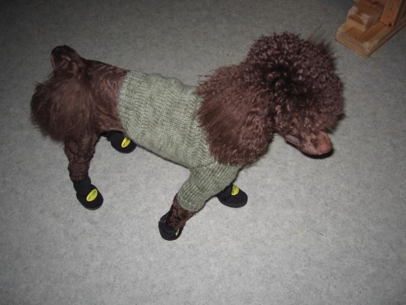 Наш пес.. Одежки для питомцев