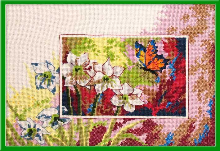 058_нарциссы и бабочка. Растения (в основном цветы)