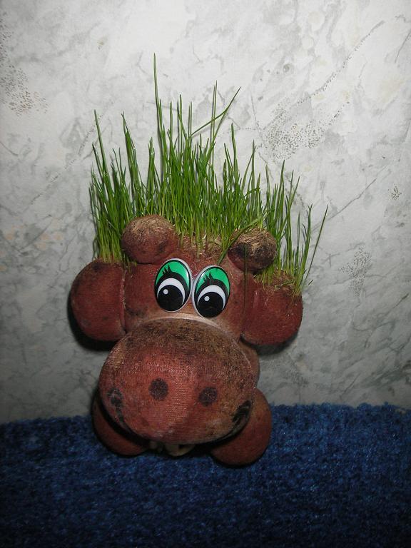 мой бычок 2009. Растения комнатные