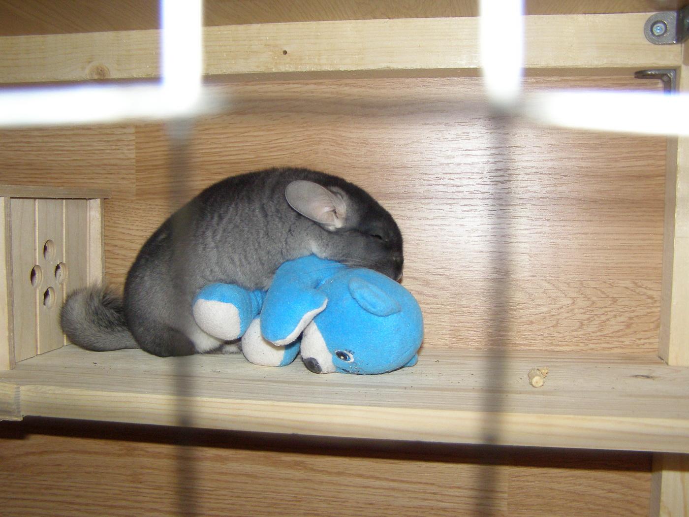 Спим. Другие животные