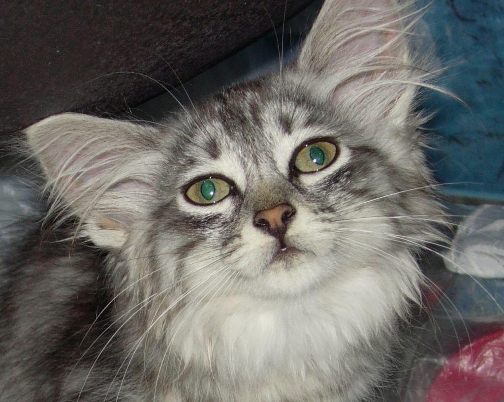 Зайка.... Кошки