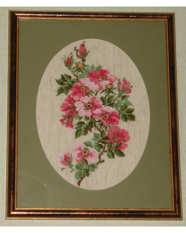 Шиповник. Растения (в основном цветы)