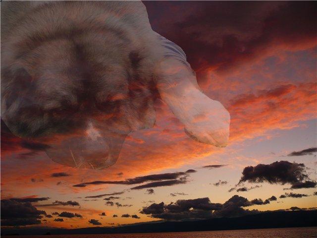 Облака. Фотоколлажи, обработанные фото