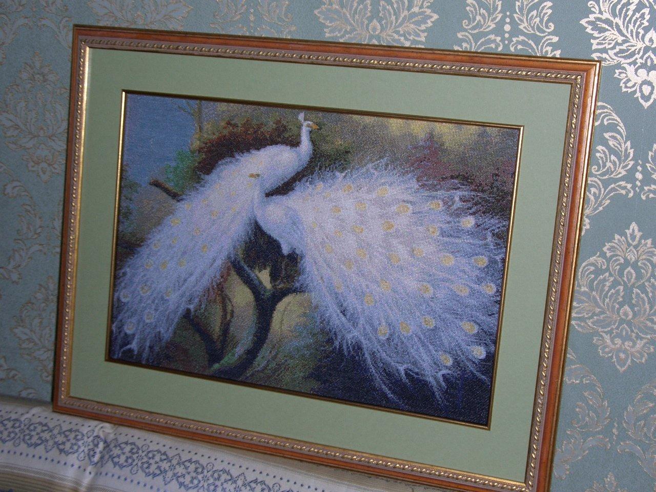 Белые павлины КК. Птицы