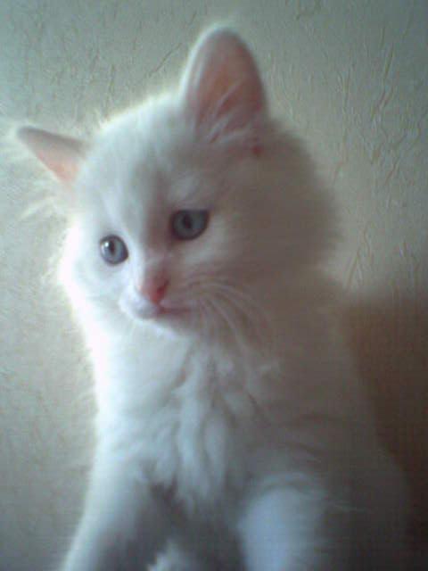 Это Булька..  Котята