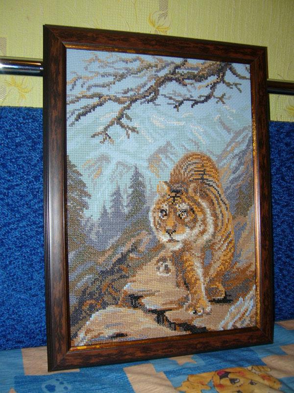 тигр риолис картинка