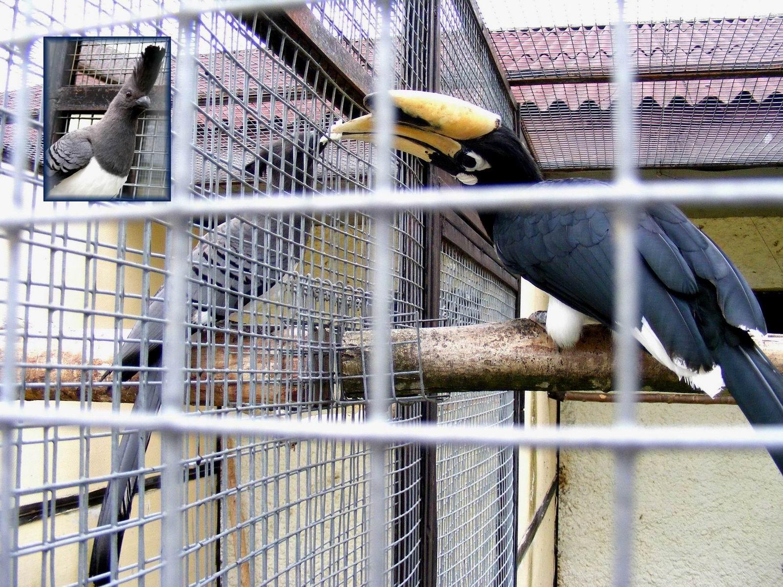 Птица-носорог. Парк птиц 'Воробьи'