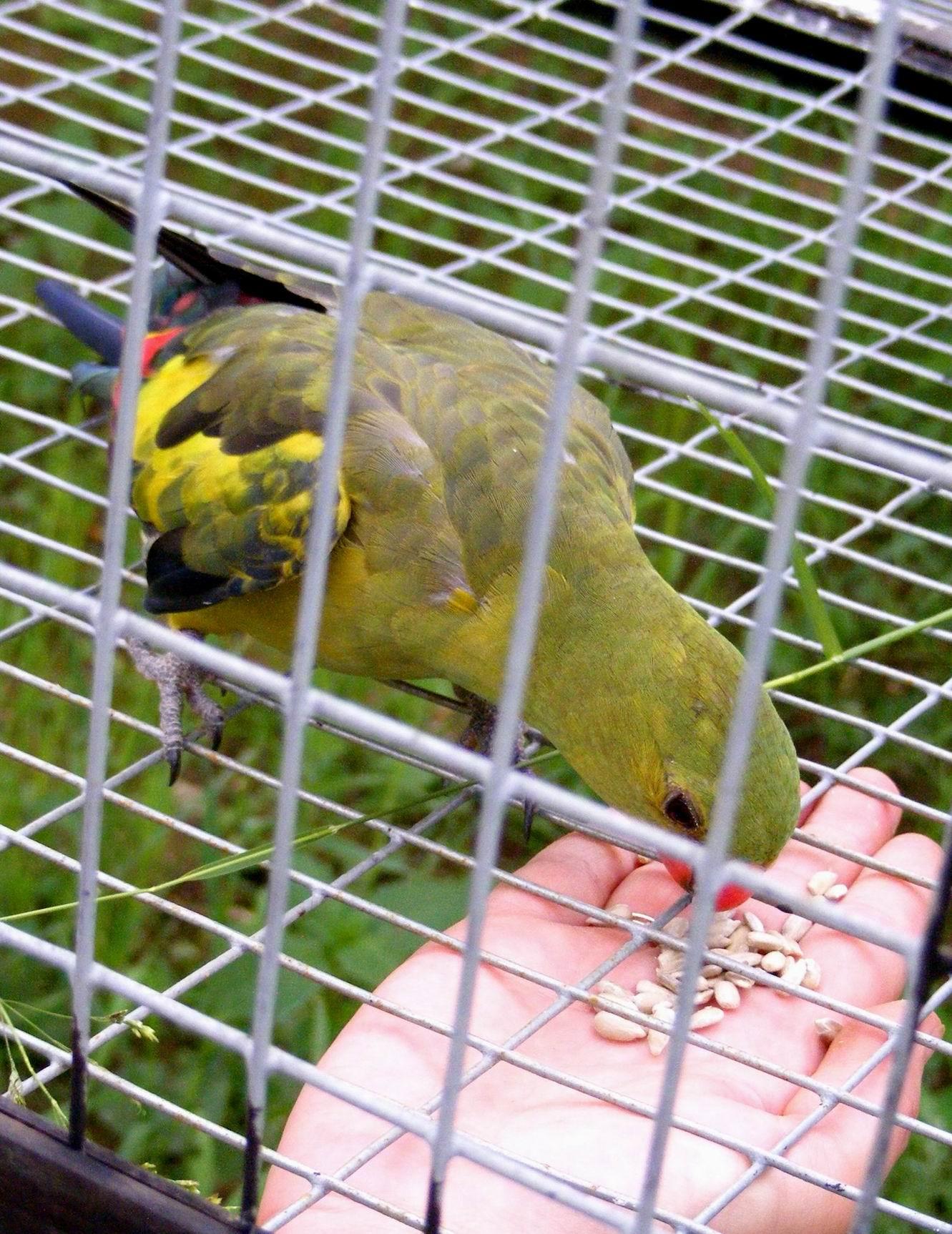 Парк птиц 'Воробьи'