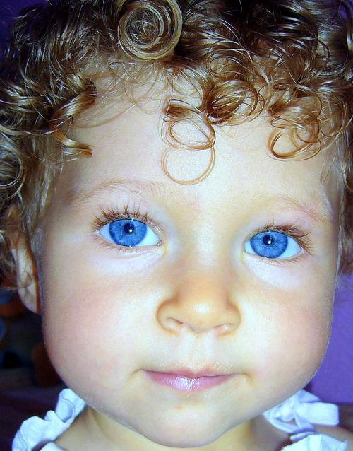 Кудрявая голуба-глазка. Очаровательные глазки