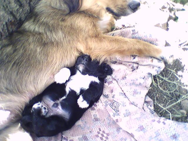 Рекс спит. Щенки