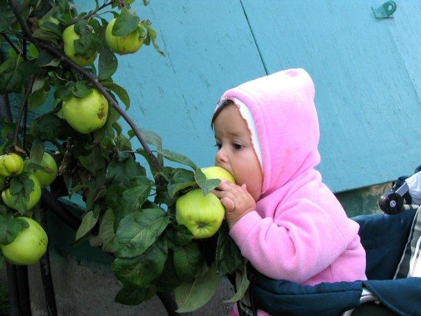 эх, яблочки, как же я вас люблю!!!))). Юный натуралист