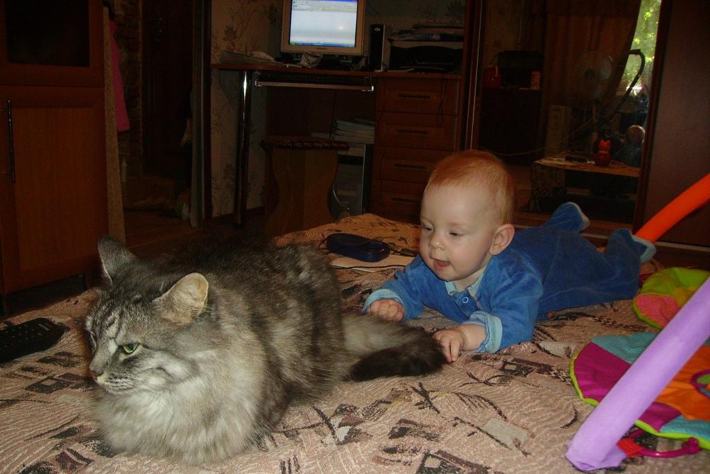 Вот я до тебя и добрался...!. Ребенок и   котенок