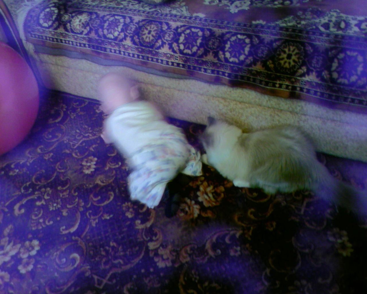 футбол для крошек Пуси и Степуси. Ребенок и   котенок