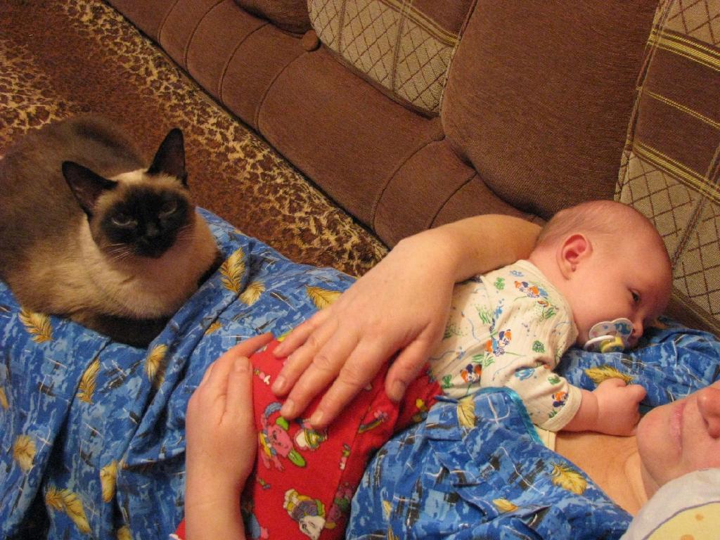 Чита и Даниэль. Ребенок и   котенок