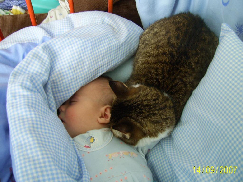 КАк вкусно пахнет молочком. Ребенок и   котенок