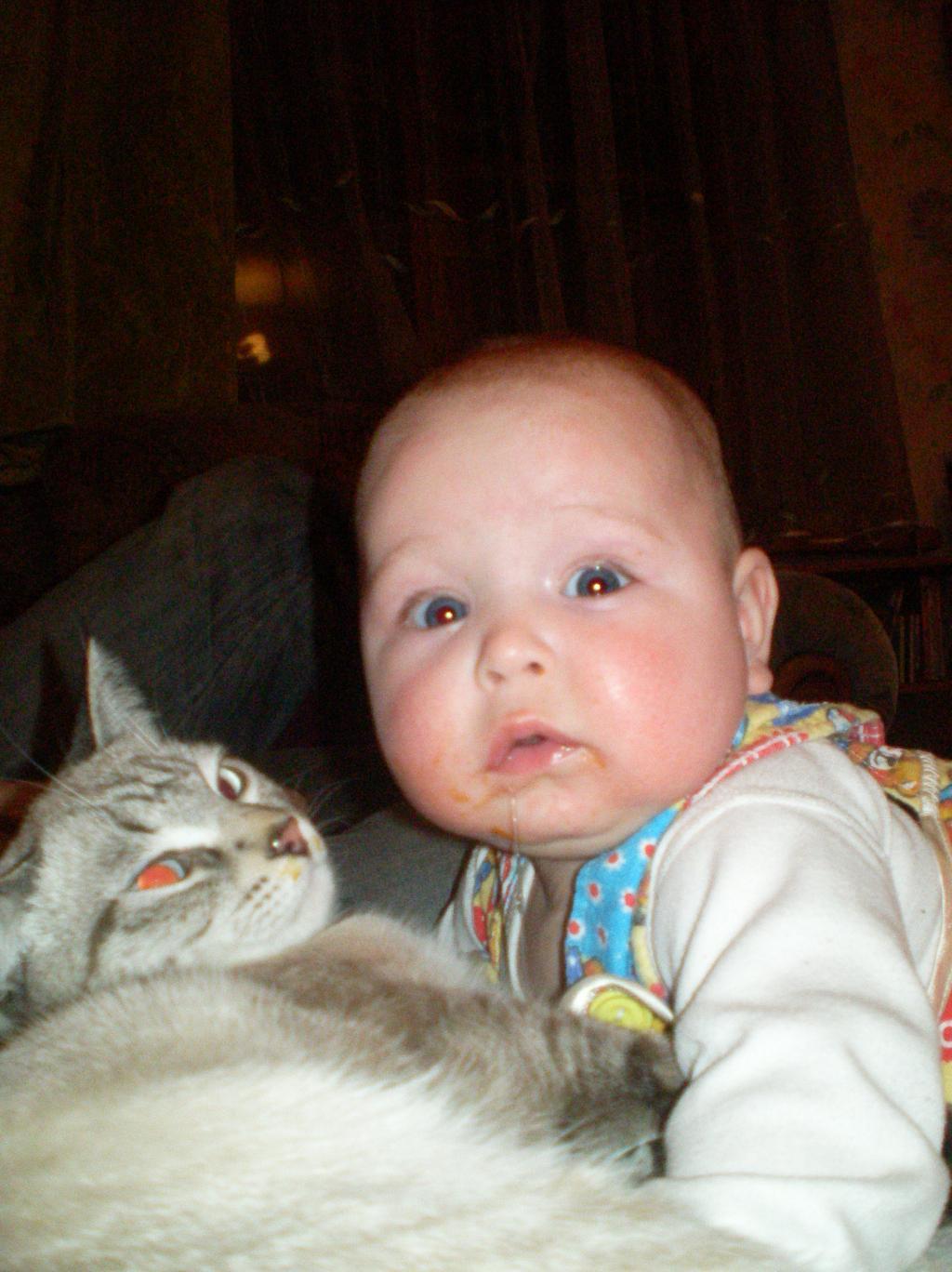 Атас! Родители вернулись!. Ребенок и   котенок