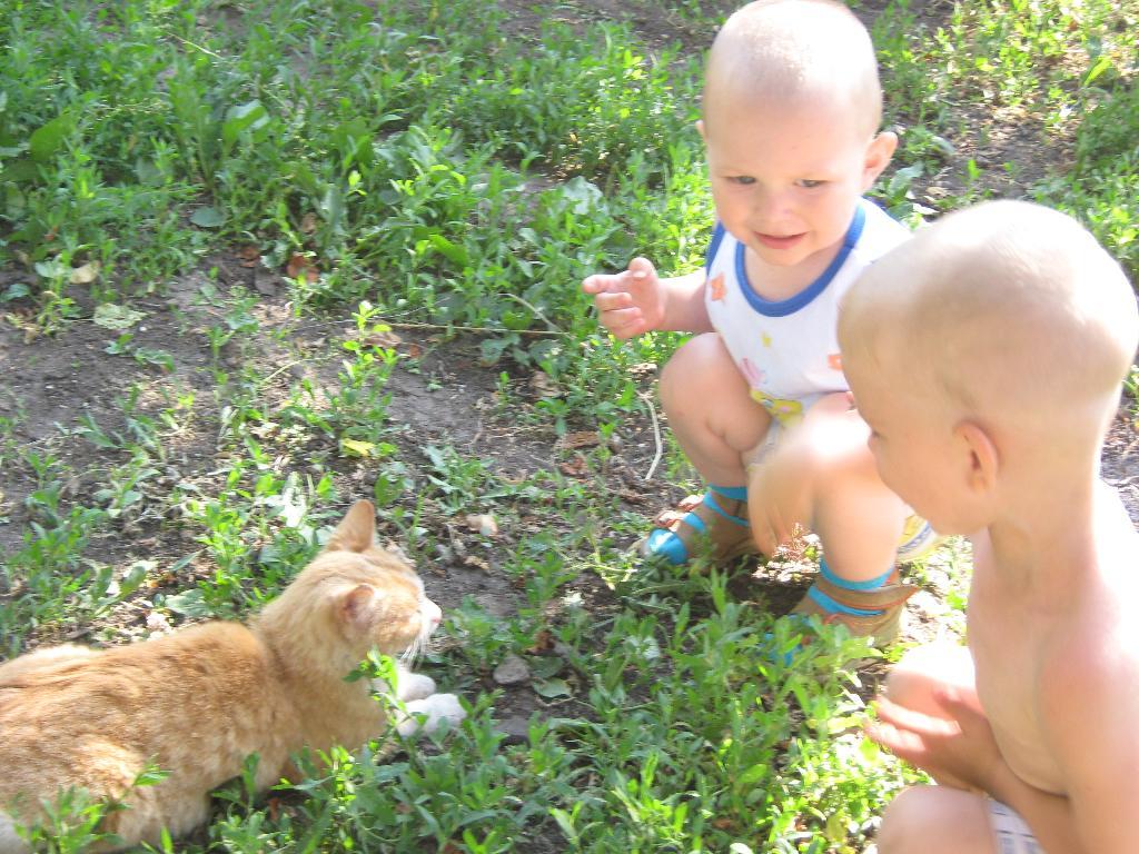 Друзья-товарищи. Ребенок и   котенок