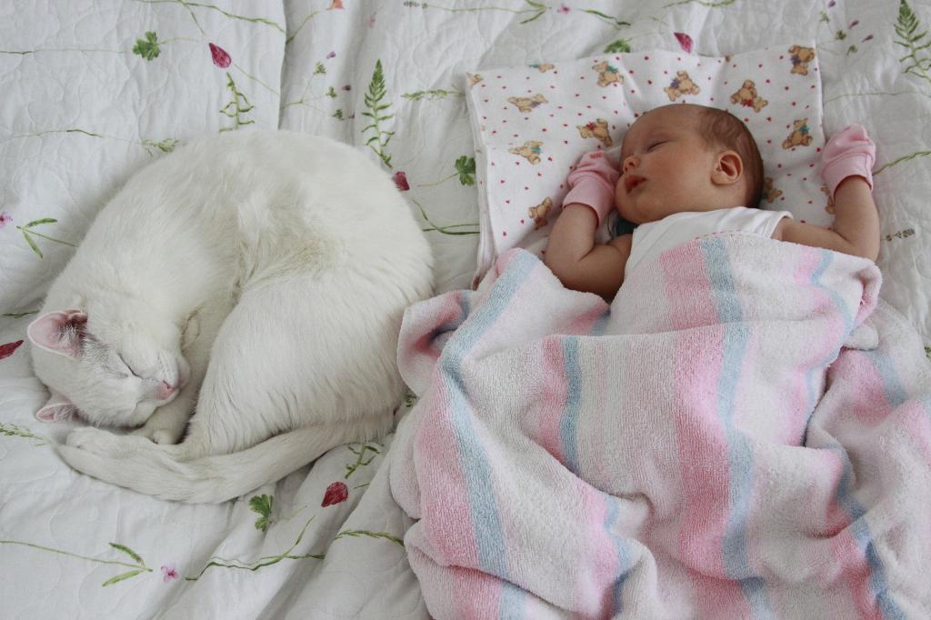 Спят усталые котята... Ребенок и   котенок