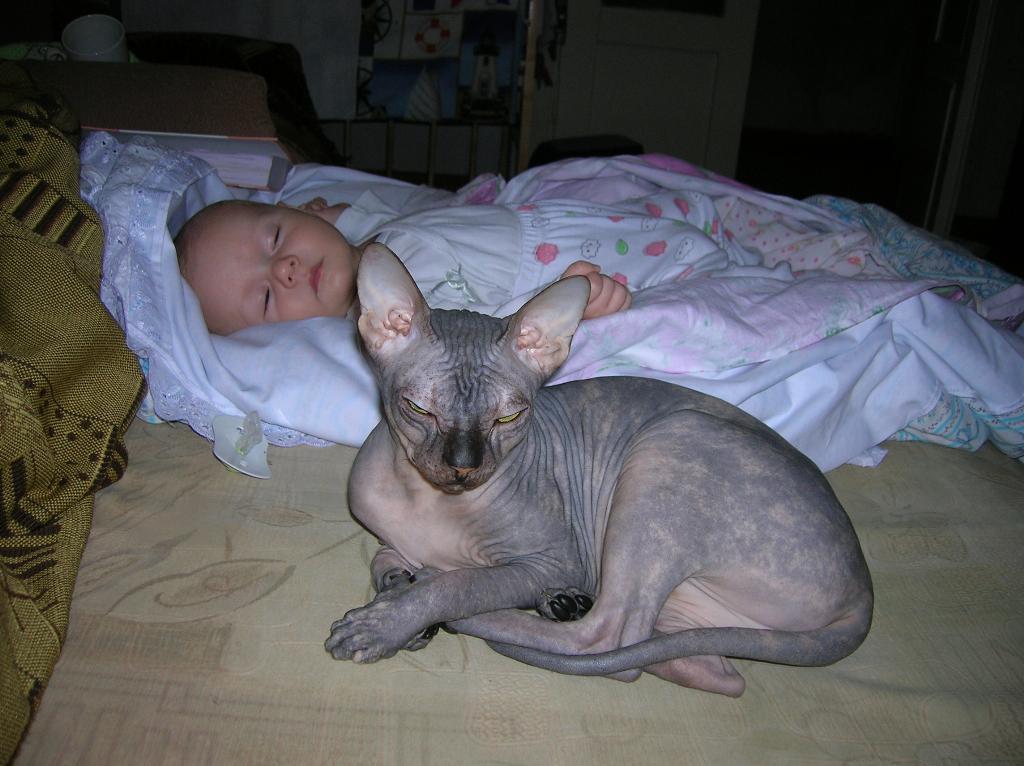 СПЛЮ ТОЛЬКО С ОХРАНОЙ. Ребенок и   котенок