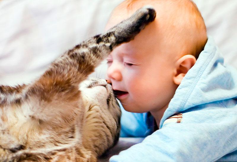 Безграничная нежность. Ребенок и   котенок