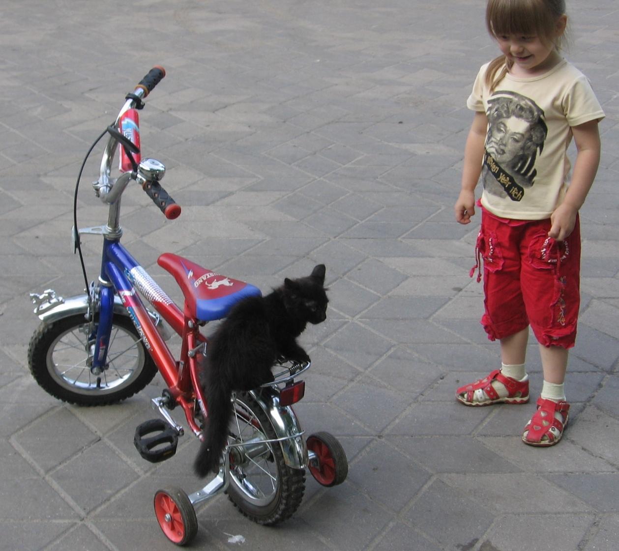 вылысыпыдысты!!!. Ребенок и   котенок