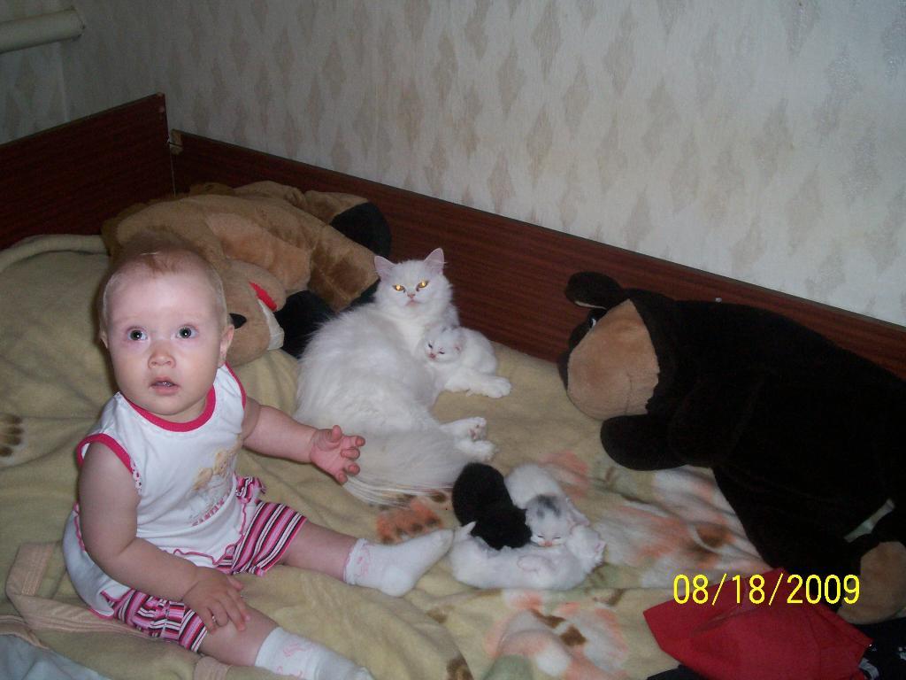 ' Мама , а что котиков трогать нельзя????'. Ребенок и   котенок