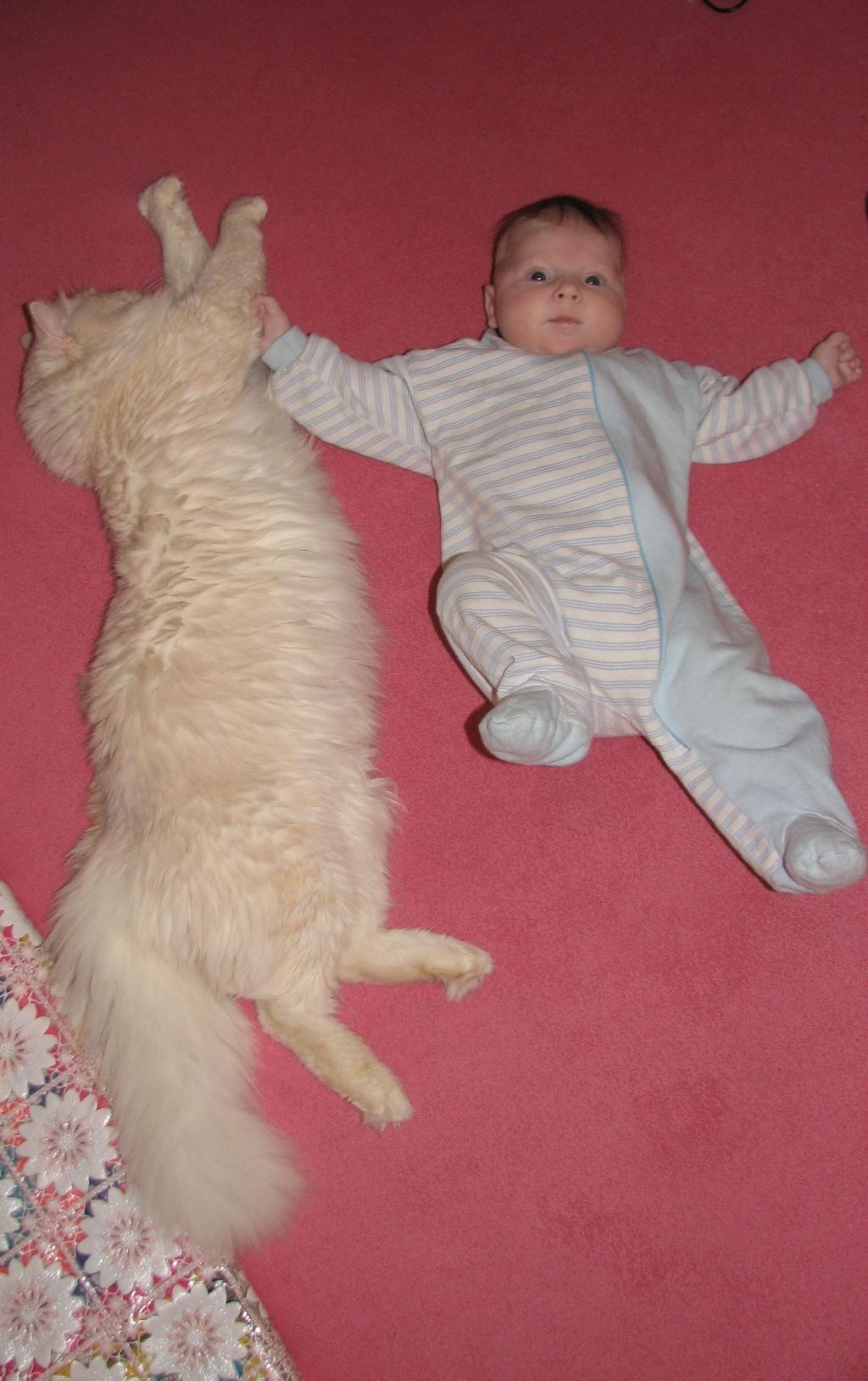 Скоро я тебя перерасту..... Ребенок и   котенок