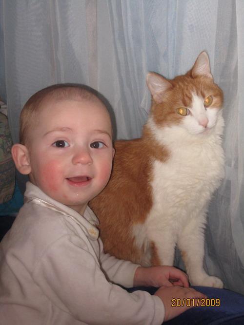Друзья. Ребенок и   котенок