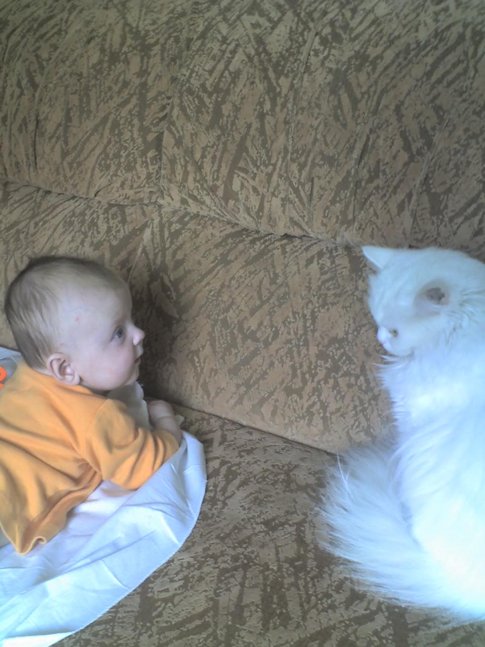 Кошка - друг человека!. Ребенок и   котенок