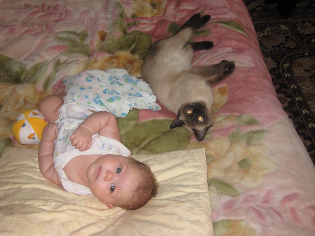 Кто там?. Ребенок и   котенок
