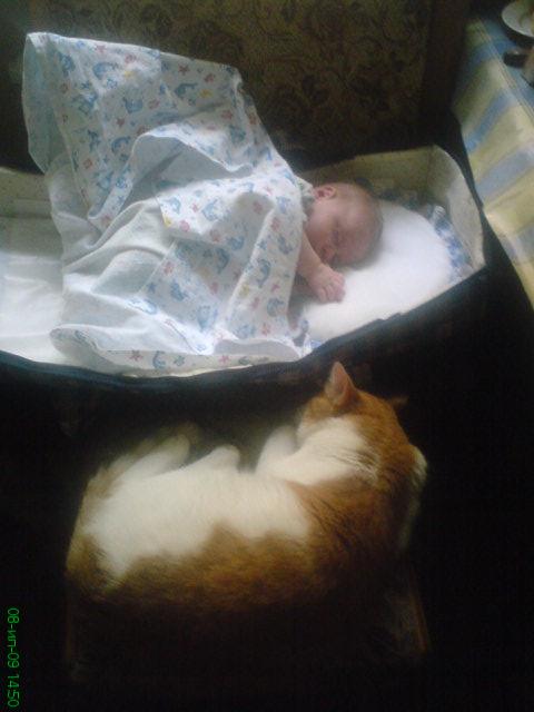 отдых. Ребенок и   котенок