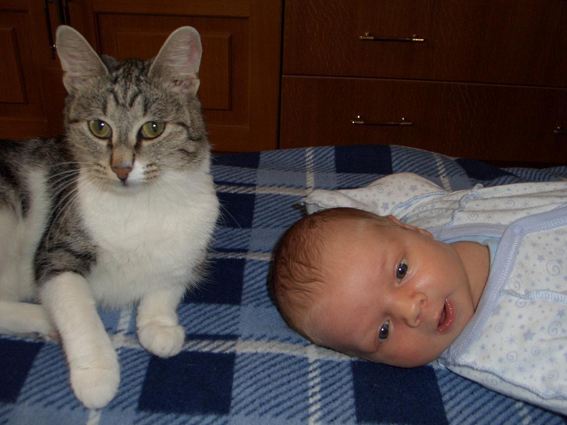 Арсений и Кузя. Ребенок и   котенок