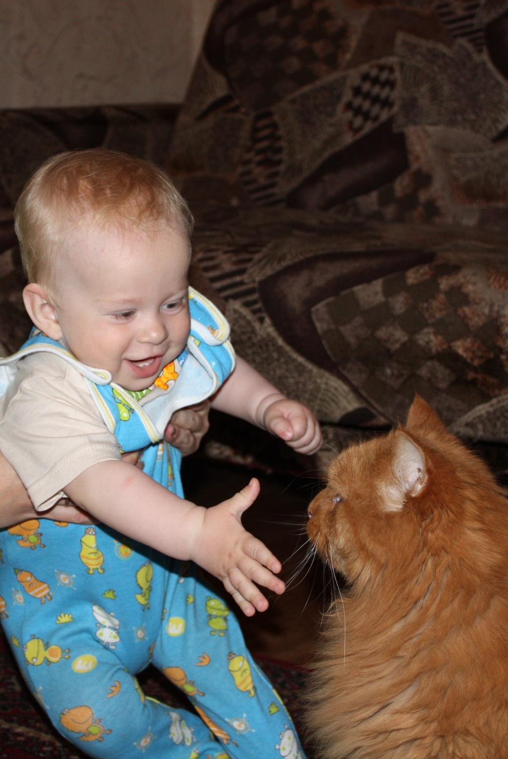 Дайте мне его подергать за усы!. Ребенок и   котенок