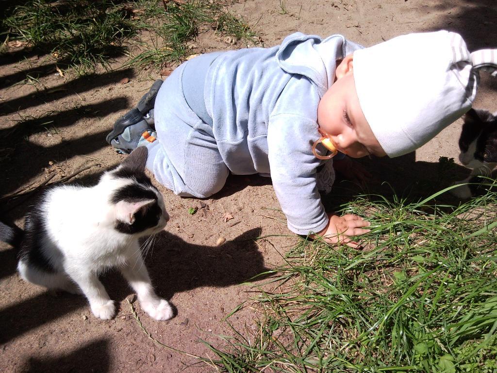 наперегонки. Ребенок и   котенок