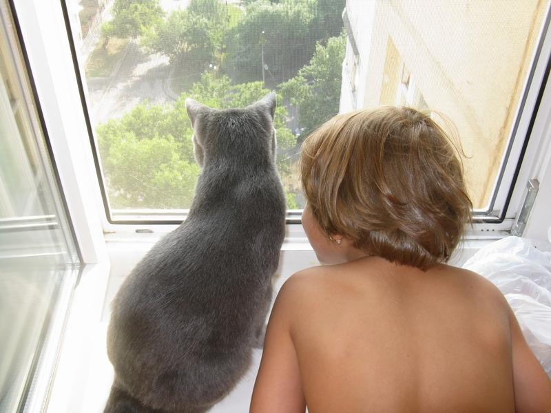 Высоко сидим, далеко глядим .... Ребенок и   котенок