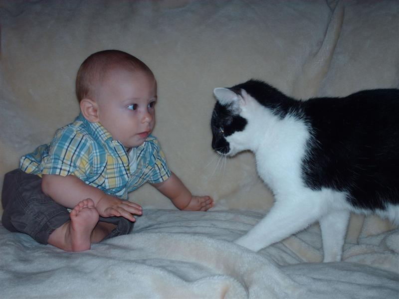 Ты не кусаешься? - А ты?. Ребенок и   котенок