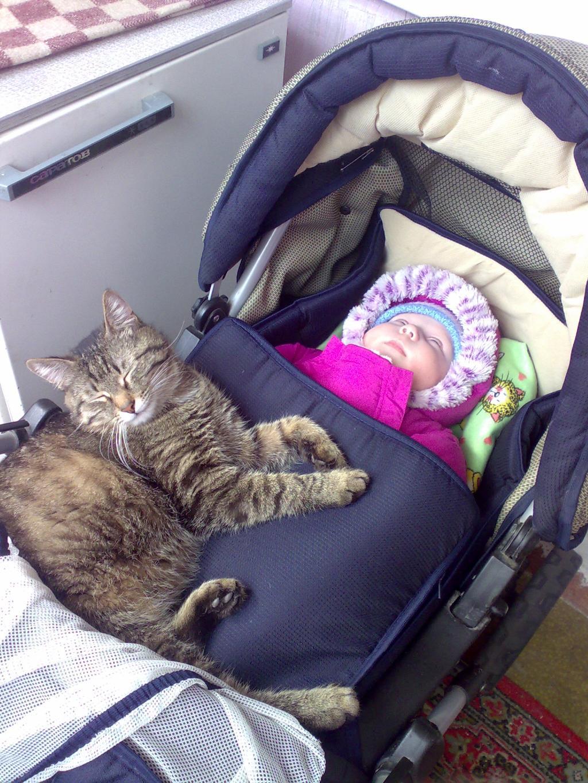 мишутка с кузьмой спят. Ребенок и   котенок