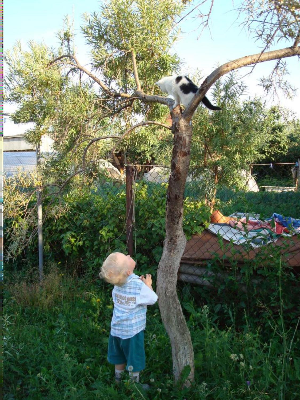 кошка,кошка, поиграй со мной немножко..... Ребенок и   котенок