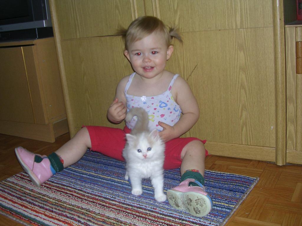 Маленькие друзья. Ребенок и   котенок