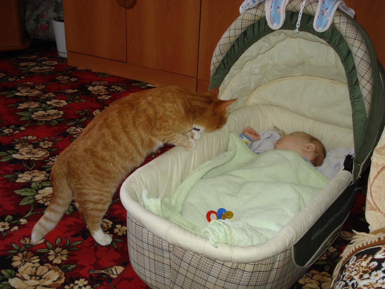 Малыш, ты спишь?. Ребенок и   котенок