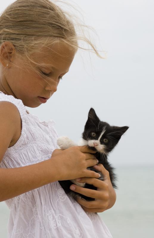 Портрет котёнка с девочкой. Ребенок и   котенок