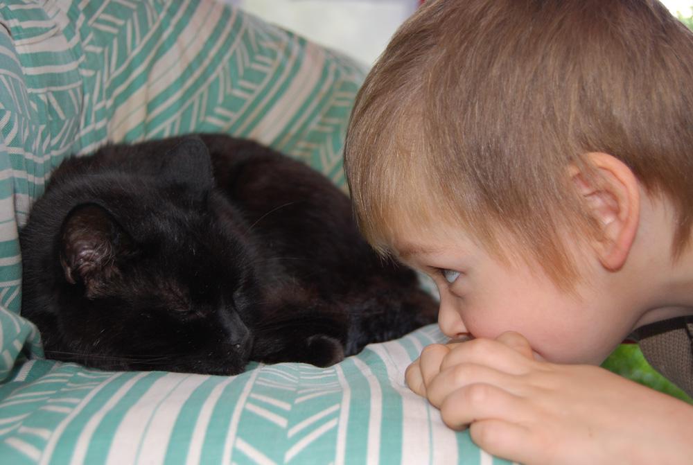 Интересно, что ему снится?. Ребенок и   котенок