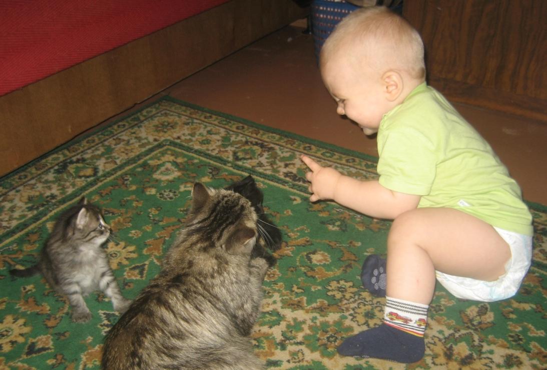 А почему они меня боятся?. Ребенок и   котенок