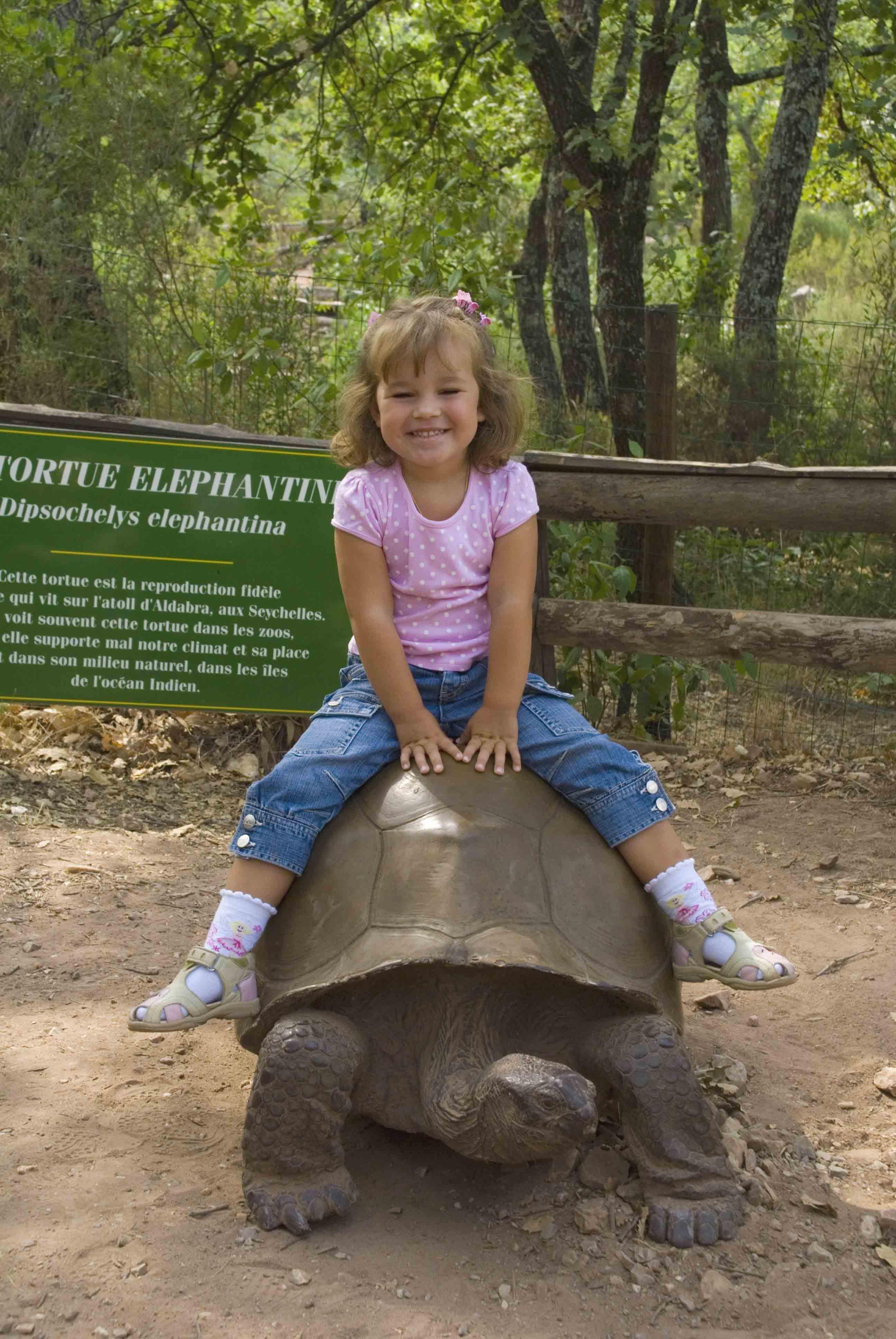 А теперь покатай меня, большая черепаха!!. Юные путешественники