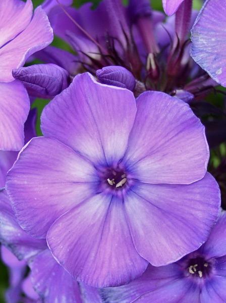 Блю парадайз. Цветы