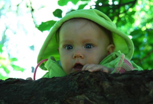 Гномик на дереве. Юные путешественники